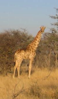 Hunter Safari - African Hunting Safari Namibia